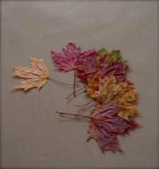 feuilles1.jpg
