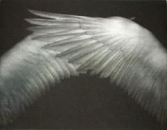 watanabe-ailes[1].jpg