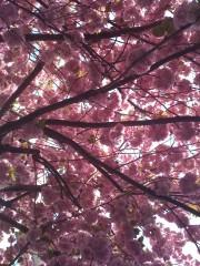 printemps3.jpg