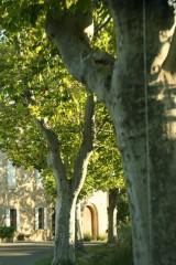 arbres.jpg